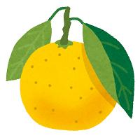 fruit_hyuuganatsu.png